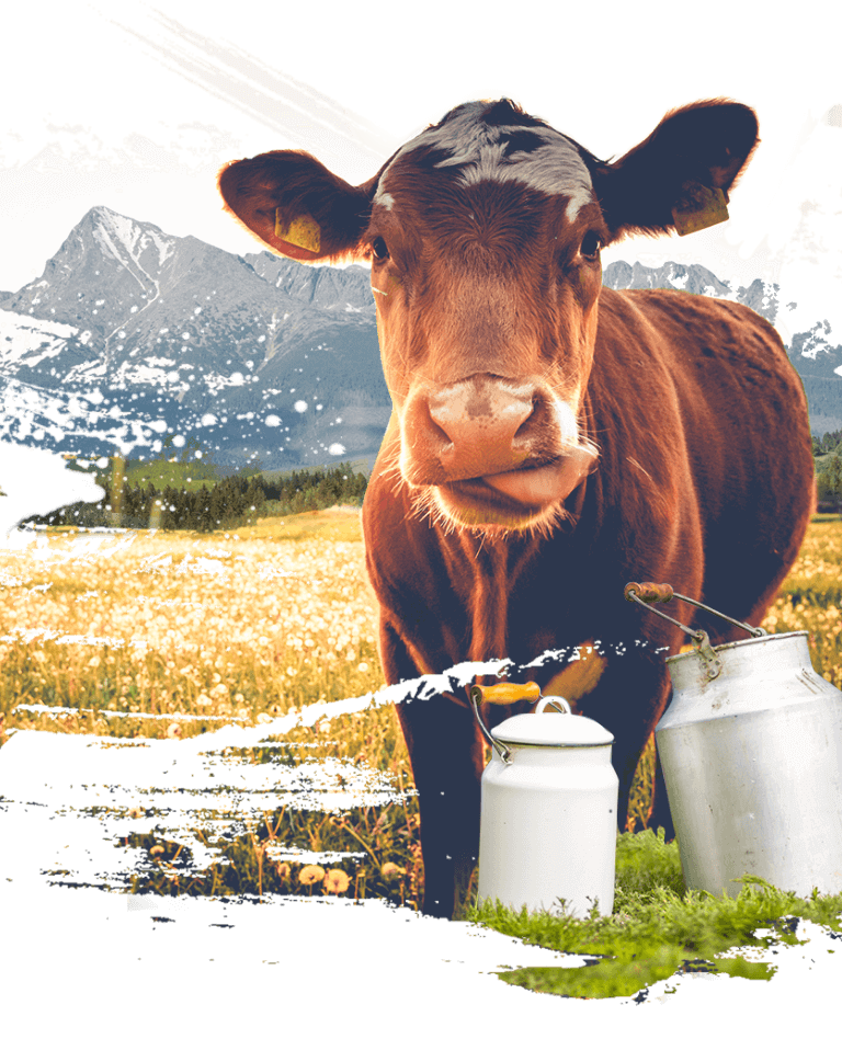 Krava pozadie